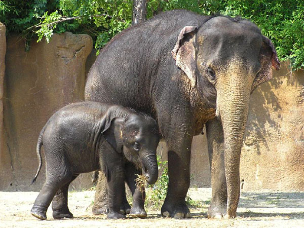 Research Priorities of Tuberculosis for Elephants in Human Care