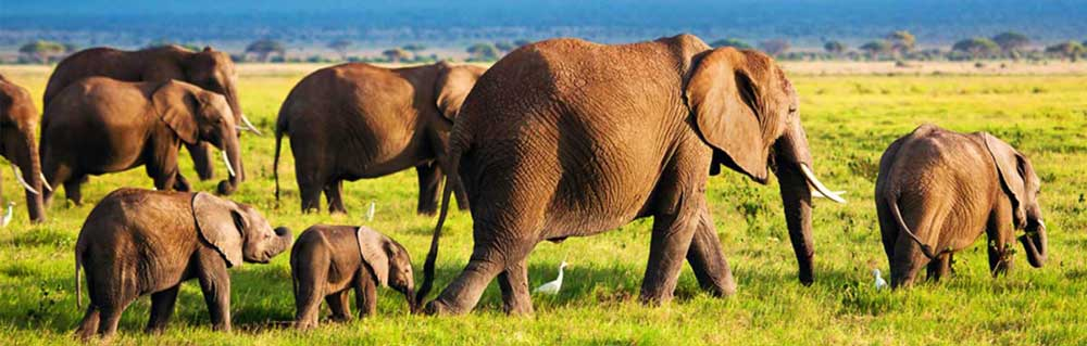 25 Things You Might Not Know About Elephants International