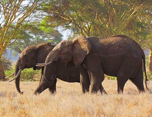 Elephant deterrent effectiveness in light of ecological and agricultural variation, Kenya