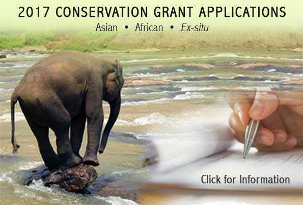 IEF Conservation Grants