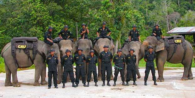 Sumatra Elephant CRU, Indonesia
