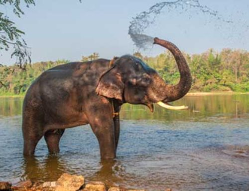 Support and Development of an Elephant Conservation Center, Myanmar