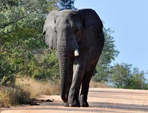 Human-elephant conflict mitigation for the communities of Chiawa, Zambia