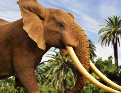 Preserving Africa´s Last Great Tuskers