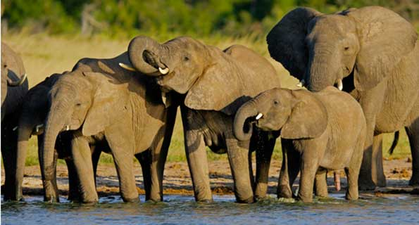 IEF Elephant Conservation