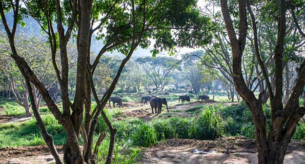 Monitoring Asian Elephants and Mitigating HEC, Cambodia