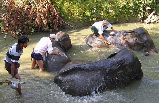 Elephant Conservation Center, Myanmar