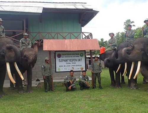 Conservation Response Units (CRUs), Indonesia
