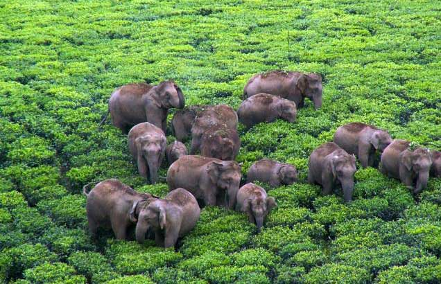 Fostering Human-Elephant Coexistence Awareness, India