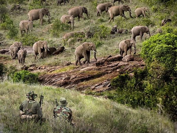 Joint Conservancy Anti-Poaching Team of NRT, Kenya