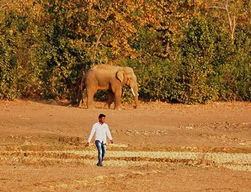 Living with Elephants: Coexistence in India