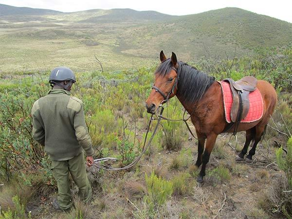 Mounted Horse Patrol Team, Kenya