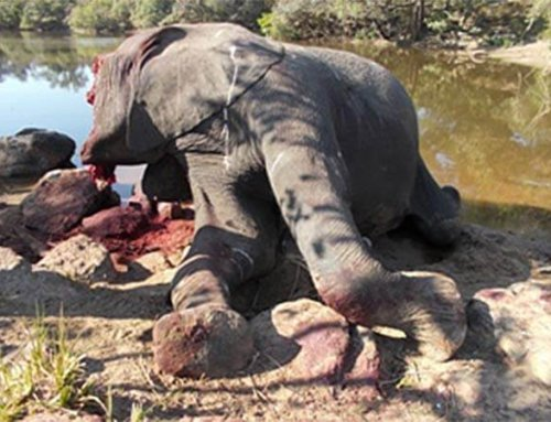 Reduction in Poisonings, South Africa & Zimbabwe