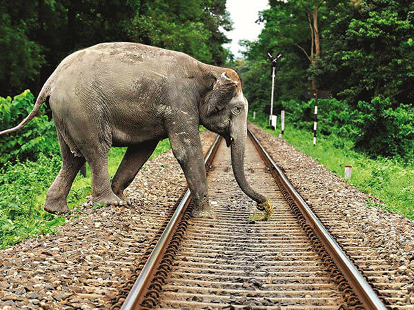Elephant Conservation Railway Stakeholders Workshop, India
