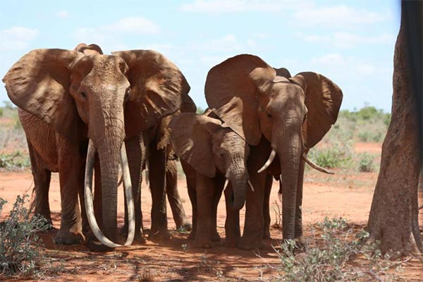 Support to wildlife protection efforts in the Lower Zambezi National Park