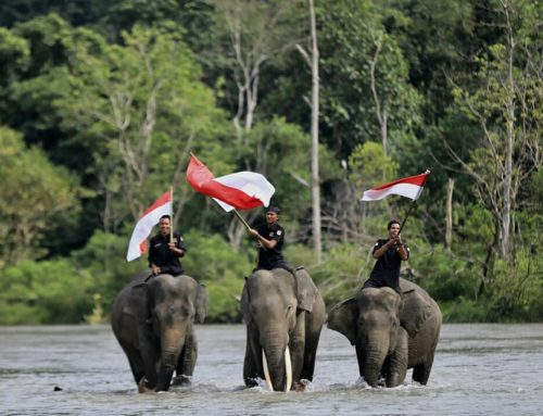 Community Based Protection of Sumatran Elephant Populations and Habitat in northern Sumatra through Conservation Response Units (CRU)