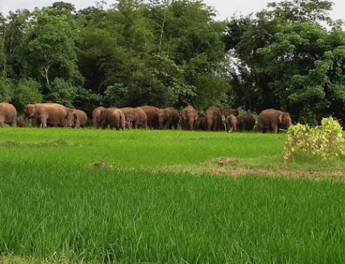 Securing Elephant Corridors through Human-Elephant Co-existence in South West Bengal, India