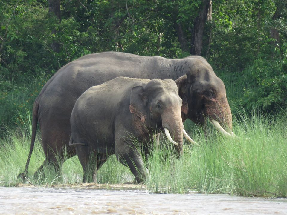 Community Based Anti-Poaching Units (CBAPUs) for Asian Elephant Conservation