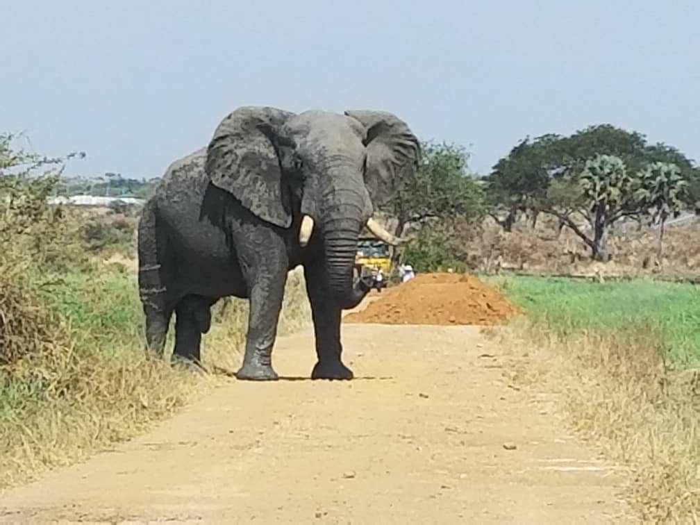 Conservation of Elephants in Key Areas of Murchison Falls Conservation Area (MFCA)