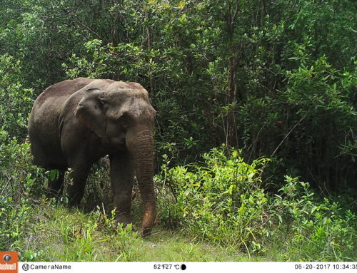 Mobilizing Community Forest User Groups for the Elephant Habitat Restoration