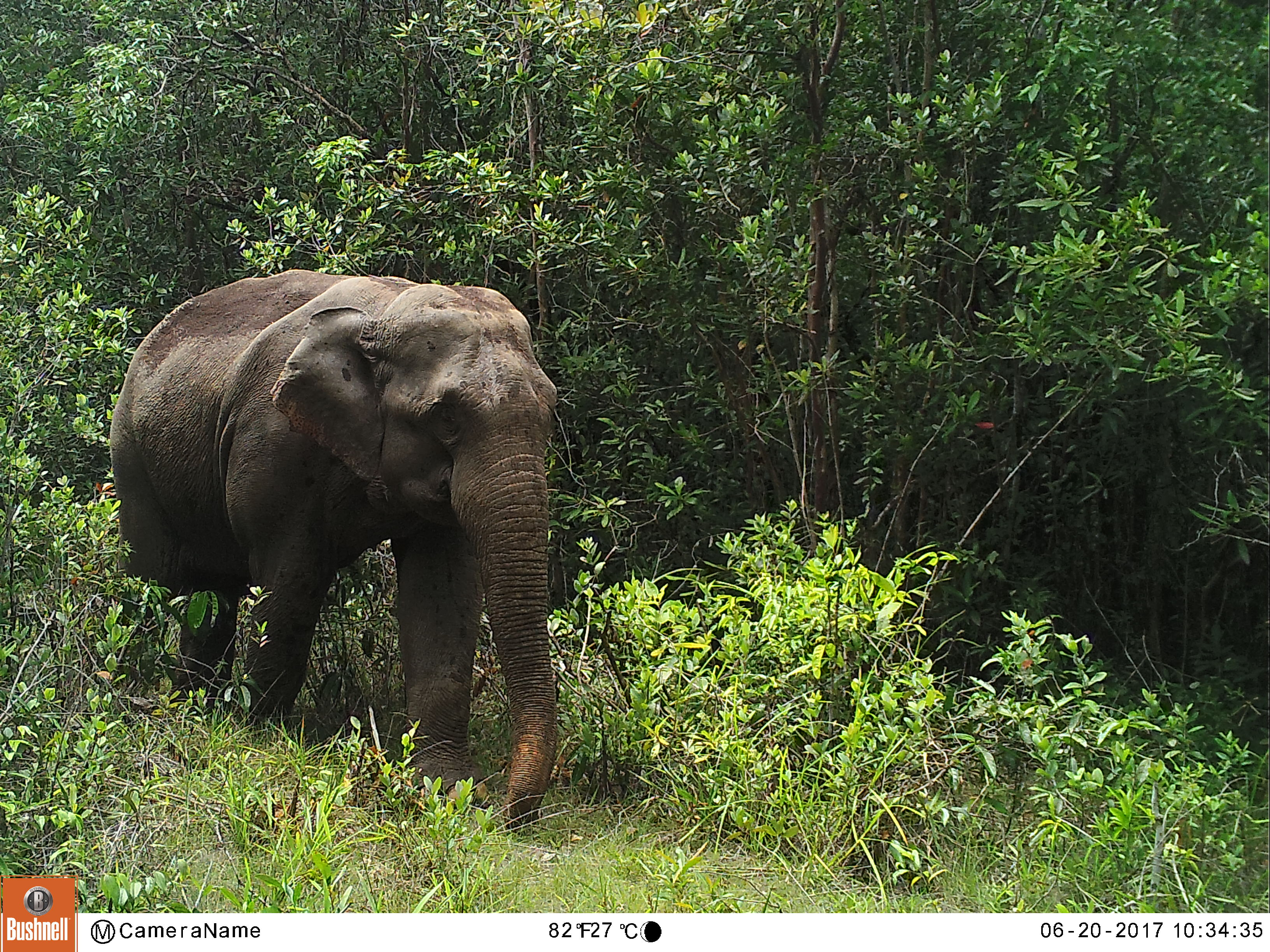 Reducing Threats to Elephants and Mitigating Human-Elephant Conflict in the Core Habitat of the Cardamom Mountain Landscape