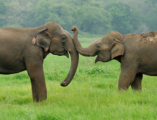 Community-based human elephant conflict mitigation in Pumat National Park