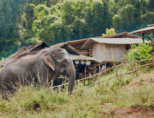 Offsetting Losses, Increasing Tolerance: Conserving Asian elephants in a Human-Use Landscape, India