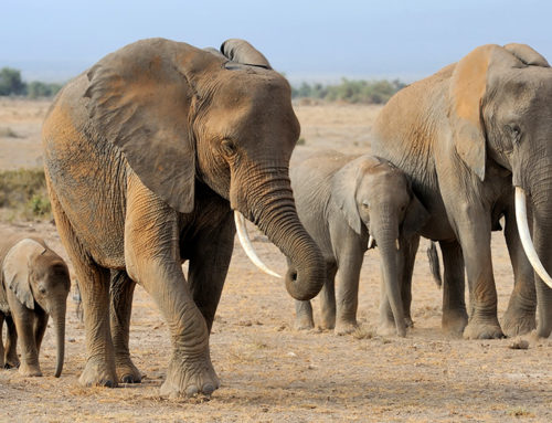 Enabling human-elephant co-existence through applied research and stakeholder engagement