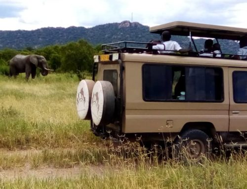 Sustaining local support for elephant conservation near Ruaha, Tanzania