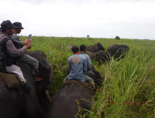 Elephant Response Units (ERUs) (aka CRUs) in Way Kambas National Park in Sumatra