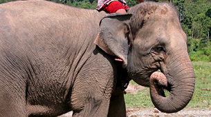 Proposal for a Sumatran Elephant Resource Center (initiated 2003)